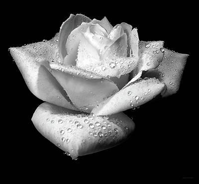 Platinum Rose Flower Poster by Jennie Marie Schell