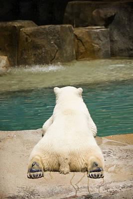 Playful Polar Bear Poster by Adam Romanowicz
