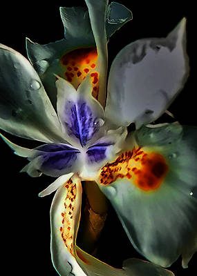 Pleatleaf Flower Poster