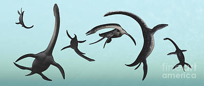 Plesiosaurs Gather At Their Underwater Poster by Mark Stevenson