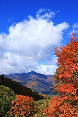 Plott Balsam Mountains Foliage Poster