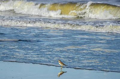 Plover Bird At Bahia Solano Beach Poster