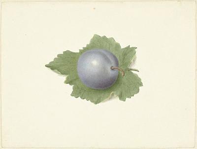 Plum On A Leaf, Elisabeth Geertruida Van De Kasteele Poster