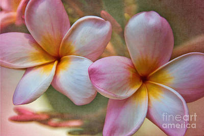 Poster featuring the photograph Plumeria Pair by Peggy Hughes