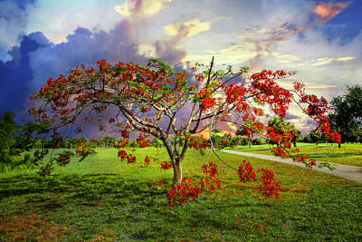 Poinciana Tree Poster by Debra and Dave Vanderlaan