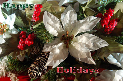 Poinsetta Christmas Card Poster by Aimee L Maher Photography and Art Visit ALMGallerydotcom