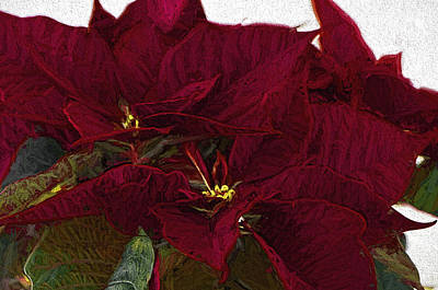 Poinsettia 3 Digital Painting On Canvas 2 Poster by Sharon Talson