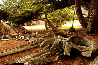 Point Lobos Whalers Cove Whale Bones Poster by Barbara Snyder
