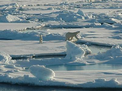 Polar Bear And Her Cub Poster