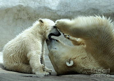 Polar Bear Mom And Cub Poster