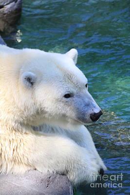 Polar Pal Poster
