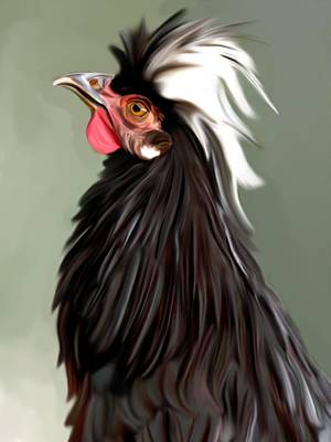 Polish Chicken 2 Poster by Karen Sheltrown