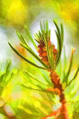 Pollen Cones Poster