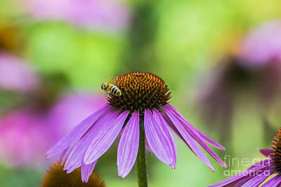 Pollen Tracks... Poster