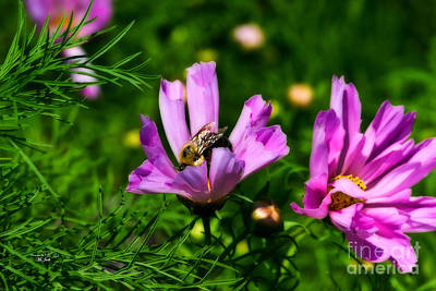 Pollinating Flowering Poster