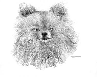 Poster featuring the drawing Pomeranian by Jim Hubbard