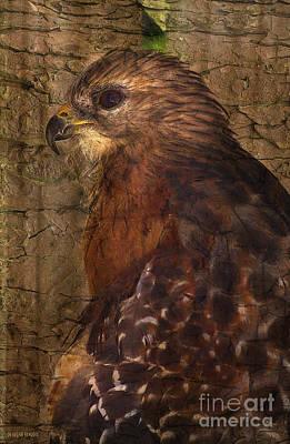 Ponce Inlet Hawk Poster by Deborah Benoit