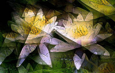Pond Lily 24 Poster by Pamela Cooper