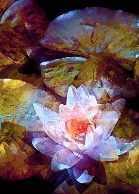 Pond Lily 26 Poster