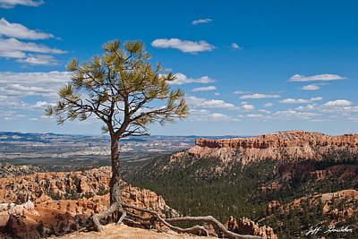 Ponderosa Pine Tree Clinging To Life On Canyon Rim Poster by Jeff Goulden