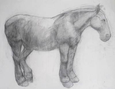 Pony Poster by Cynthia Harvey