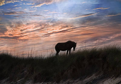 Pony On The Dunes Poster