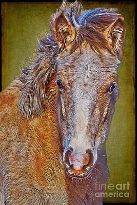 Pony Portrait  Poster