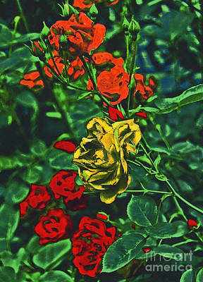 Pop Roses By Jrr Poster