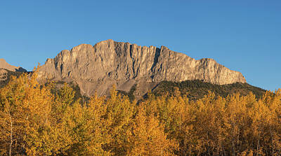 Poplar Trees In Autumn, Mount Yamnuska Poster