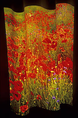 Poppies And Wildflowers Poster