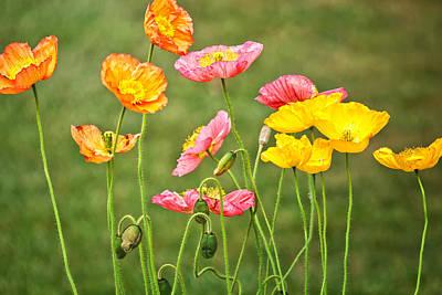 Poppies Blooming Poster by Joan Herwig