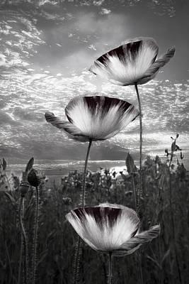 Poppies Poster by Debra and Dave Vanderlaan