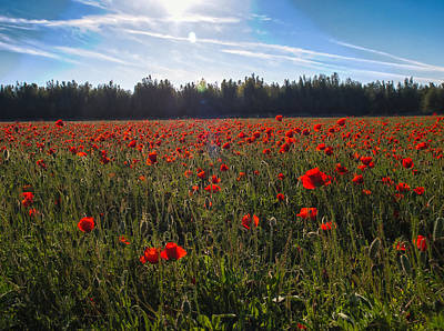 Poster featuring the photograph Poppies Field Forever by Meir Ezrachi