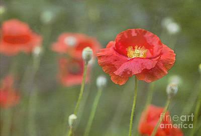 Poppies In Still Wind Poster by Elena Nosyreva