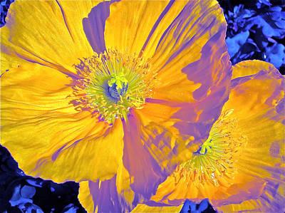 Poppy 14 Poster by Pamela Cooper