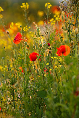 Poppy Delight  Poster by Roeselien Raimond