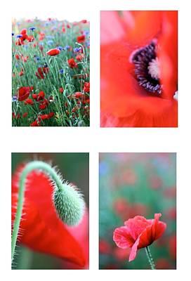 Poppy Field 1 Poster by AR Annahita