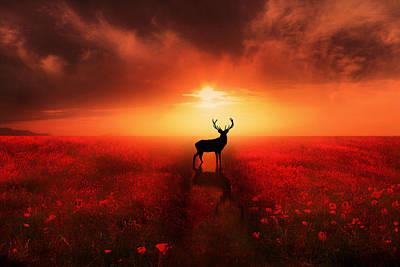 Poppy Field Dreams Poster