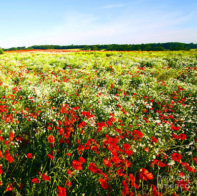 Poppy Field In Summer Poster by Craig B
