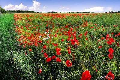 Poppy Field Poster by Robert Lacy