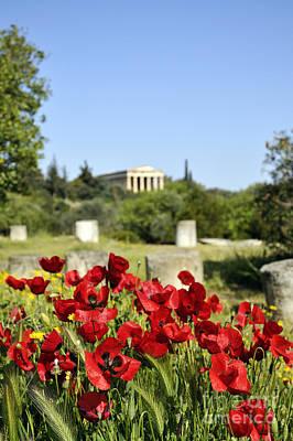 Poppy Flowers In Ancient Market Poster by George Atsametakis
