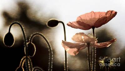 Poppy Generations Poster