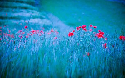 Poppy In Blue Poster by Annette Hanl