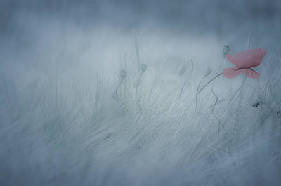 Poppy In The Mist Poster by Annette Hanl