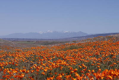 Poster featuring the photograph Poppy Land by Ivete Basso Photography