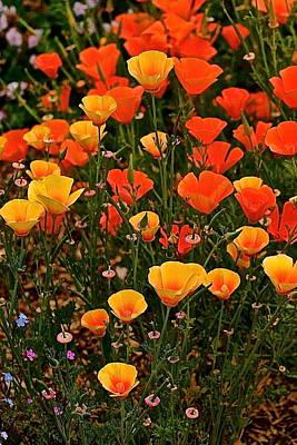 Poppy-luscious Poster