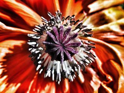 Poppy - Macro Fine Art Photography Poster