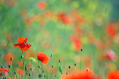 Poppy Party - Field Of Corn Poppies Poster by Roeselien Raimond