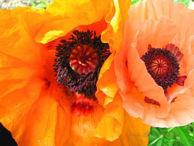 Poster featuring the photograph Poppy Power by Brooks Garten Hauschild