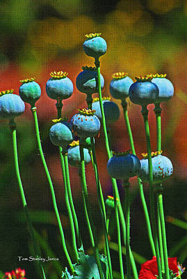 Poppy Seed Pods Poster by Tom Janca